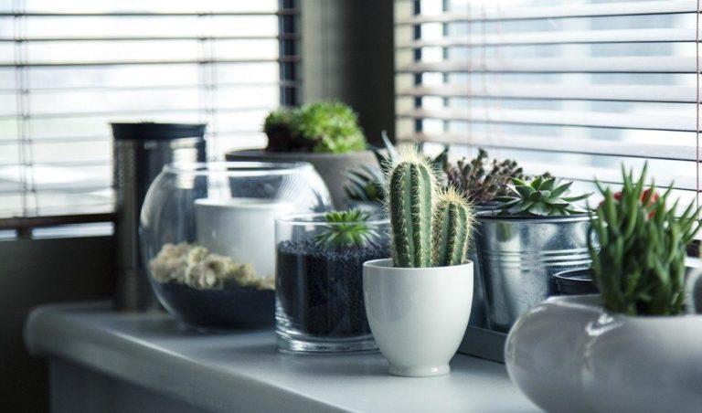 Jak wybrać właściwe rolety okienne?